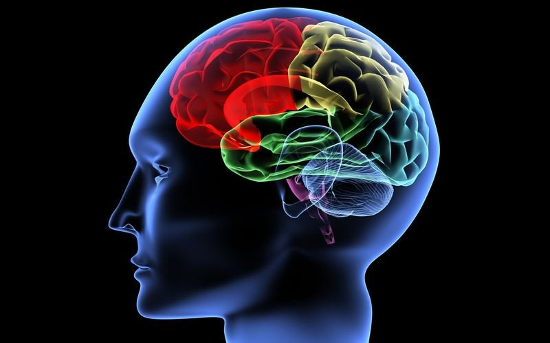 Ученые изсоедененных штатов отыскали способ безотказного улучшения работы мозга