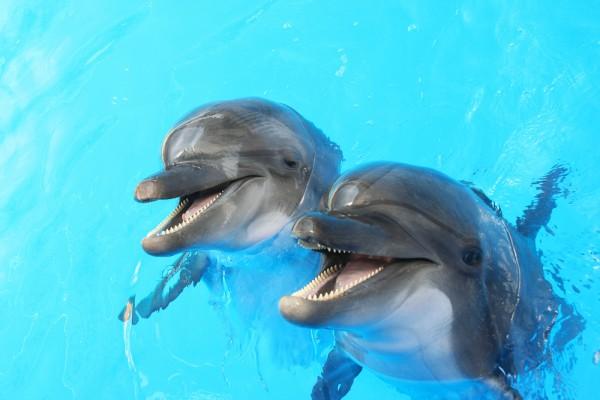 18:11 by Info Resist Зоологи обнаружили у дельфинов полноценную речь