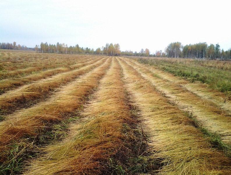 Китайцы построят завод за $20 млн вРовенской области
