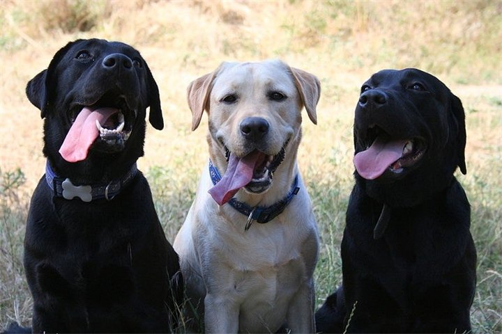 14:01 by Info Resist Ученые выяснили какая порода собак чаще