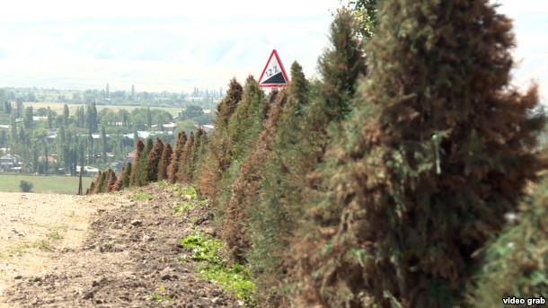ВКыргызстане власти покрасили елки взеленый цвет