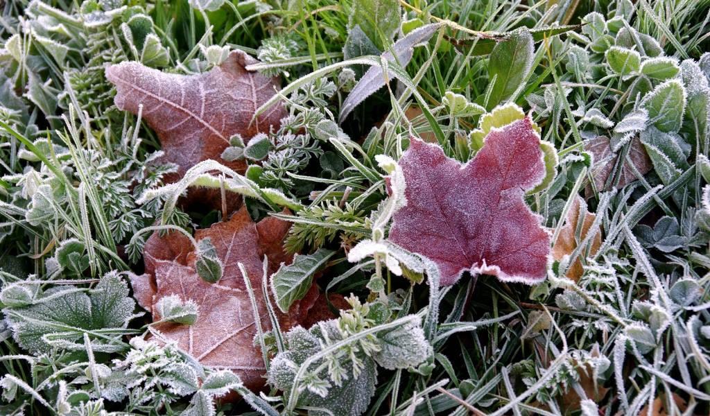 Прохладная идождливая погода ожидается встоличном регионе на этой неделе
