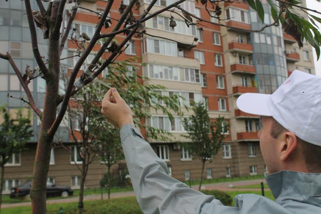 Над мэрией Оттавы поднят флаг Украины - Цензор.НЕТ 7516