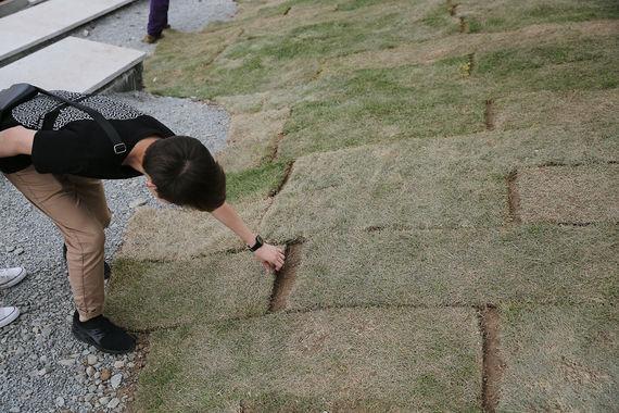 Вандалы уничтожили иукрали 10 тыс. уникальных растений впарке «Зарядье»