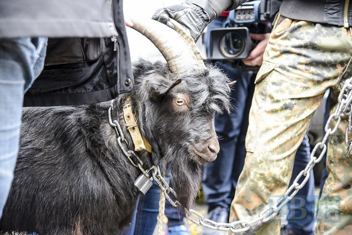 ВКиеве упосольства Чехии радикалы протестовали вкомпании козла