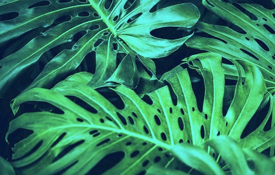 Ученые планируют сделать для военных «шпионские растения»