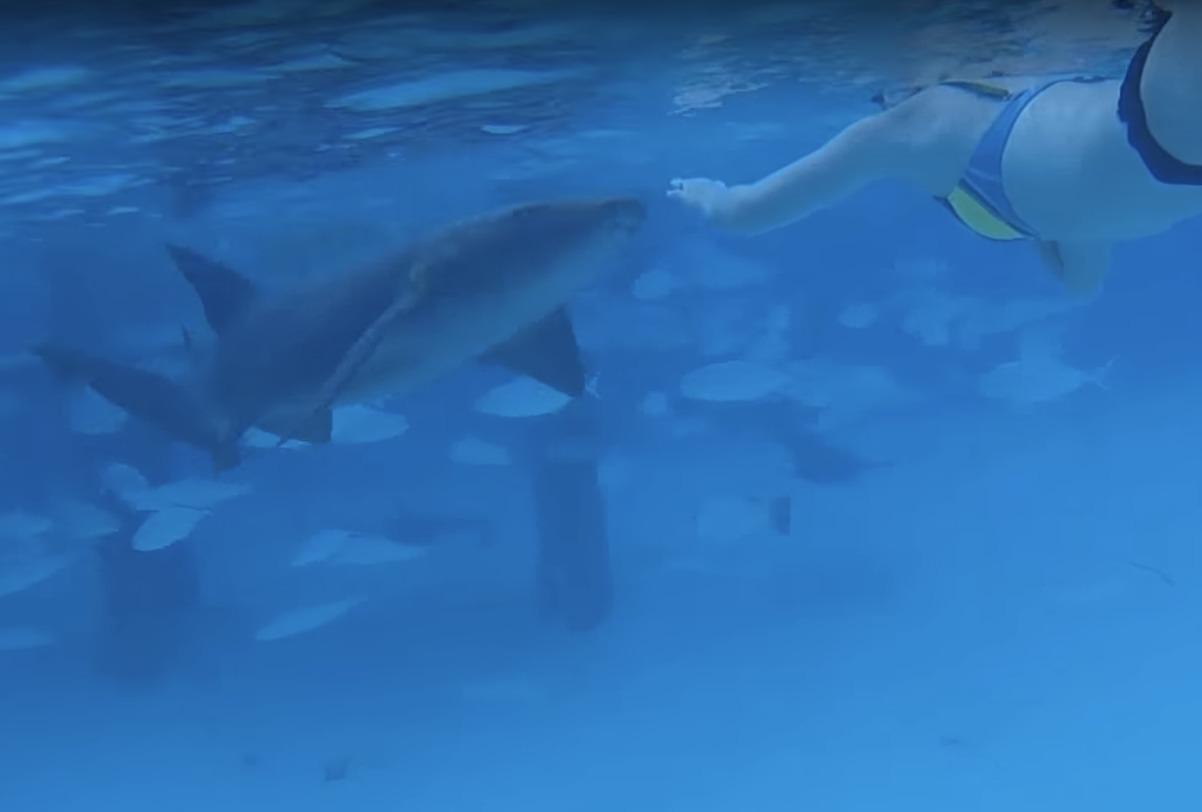 Акула укусила девушку заруку вовремя «безопасной» подводной экскурсии