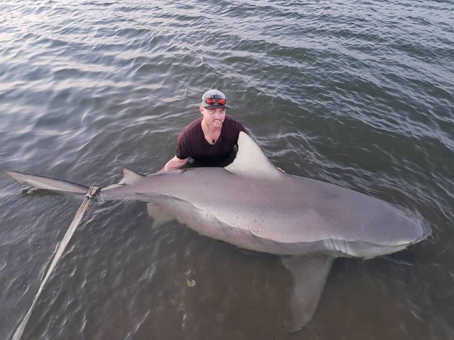 Тупорылая беременная акула попалась накрючок рыбаков