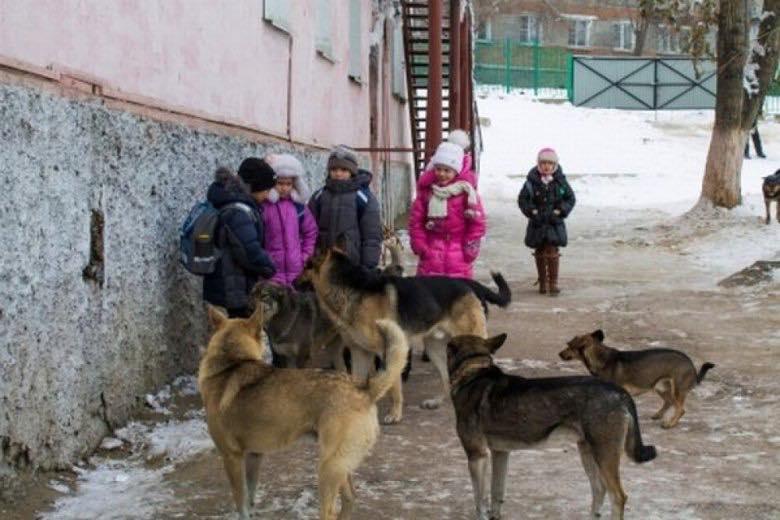 ВОдесской области стая бездомных собак набросилась надевочку
