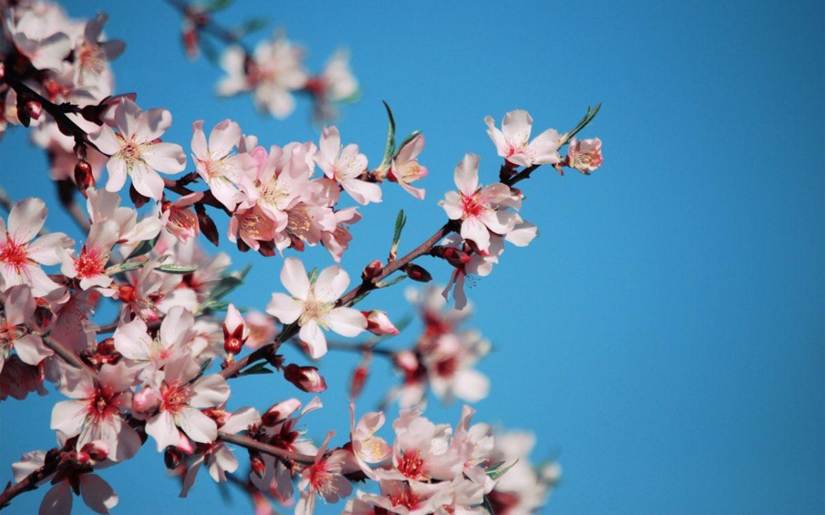 Стало известно, сколько украинцам предстоит отдыхать вконце весны  — продолжительные  уикенды
