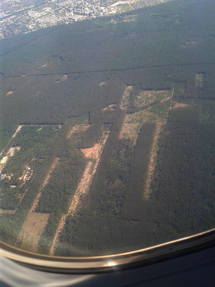Под Киевом массово вырубают лес под видом борьбы с короедами